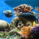 Coral_Reef_Fish_and_Coral[1]